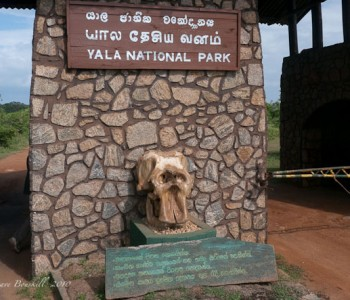 yala-national-park.jpg