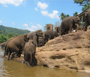 elephants-pinnawala-elephant-orphanage-1.jpg