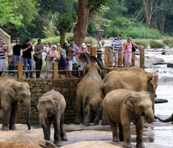 elephants-pinnawala-elephant-orphanage-4.jpg