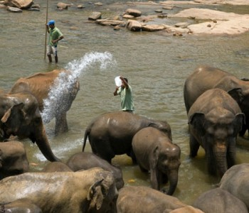 elephants-pinnawala-elephant-orphanage-8.jpg